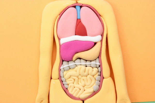 私が大腸がんに気づくきっかけになったのは貧血と疲れやすさ